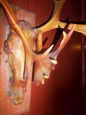 Close up of the caribou antlers, the only object left from the Macpheadris Era (1716-1729).